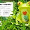 Anthology book intriguing animals spread frog